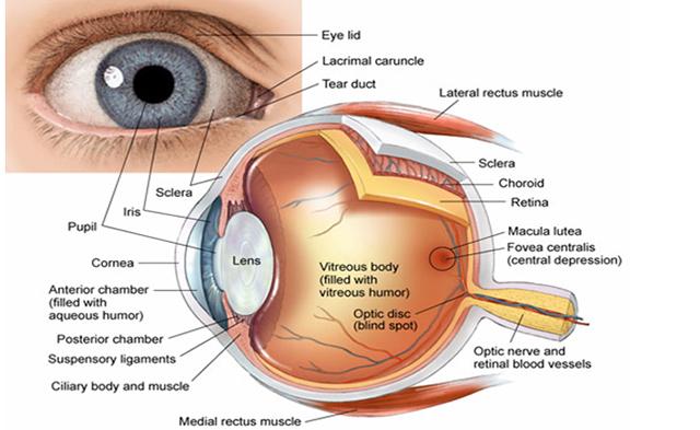 Katarakti senil  perdja e syrit   diagnoza dhe si bëhet trajtimi i tij