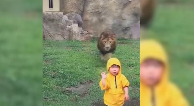 Luani tenton ta hajë fëmijën  por ja çfarë ndodh në momentin e fundit