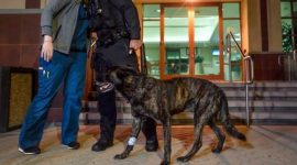 """Info Shqip: Qeni hero ndalon të dyshuarin në transmetim """"live"""""""