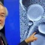 Info Shqip: Shkencëtari Japonez, fitues i çmimit Nobel, tregon se si pastrohet trupi gjatë Ramazanit