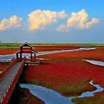 Info Shqip: Një kryevepër e natyrës, njihuni me plazhin e kuq të Kinës (FOTO)