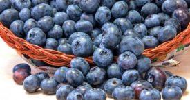Info Shqip: Boronica është fruti më i shëndetshëm në botë, ja arsyet