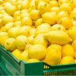 Info Shqip: Skandaloze: Në Maqedoni tregtarët e morën kilogramin e limonit 35 denarë ndërsa e shitën me çmim 180 denarë